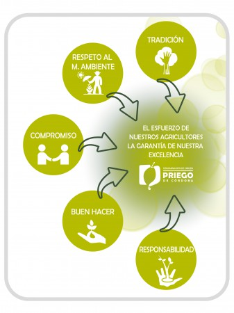 tienda gourmet para comprar aceite de oliva Denominacion de origen priego de cordoba