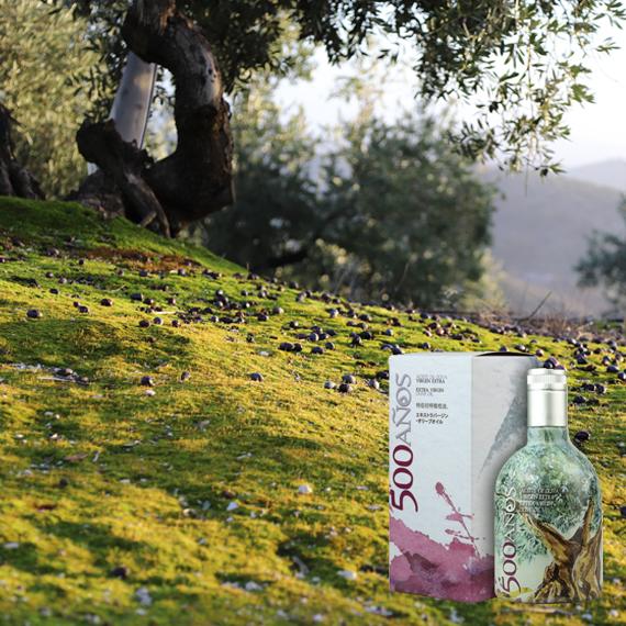 500 AÑOS - La aceituna debe ser de la mejor calidad, además de estar en su punto de madurez, para conseguir un AOVE de primera calidad. Por eso, los aceites de oliva de Priego de Córdoba, estan catalogados como los mejores del mundo